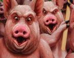 lelijke-varkens