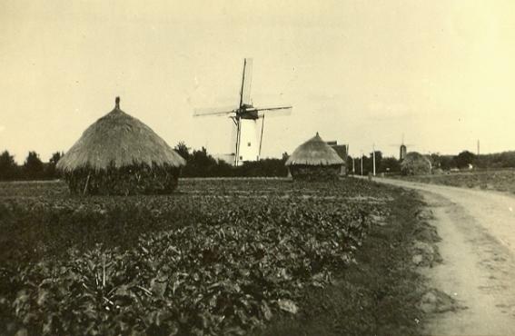 5-tn-landbouw-hooi
