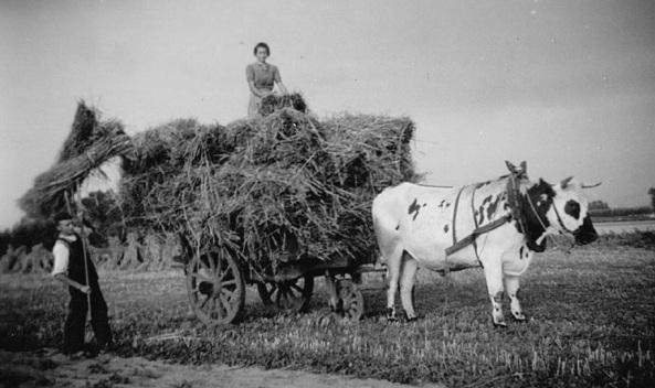 landbouwer-aan-het-werk-b