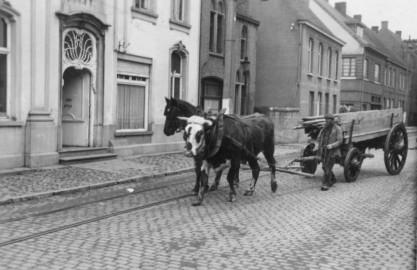 knesselare-017-gvdc-koe-en-paard